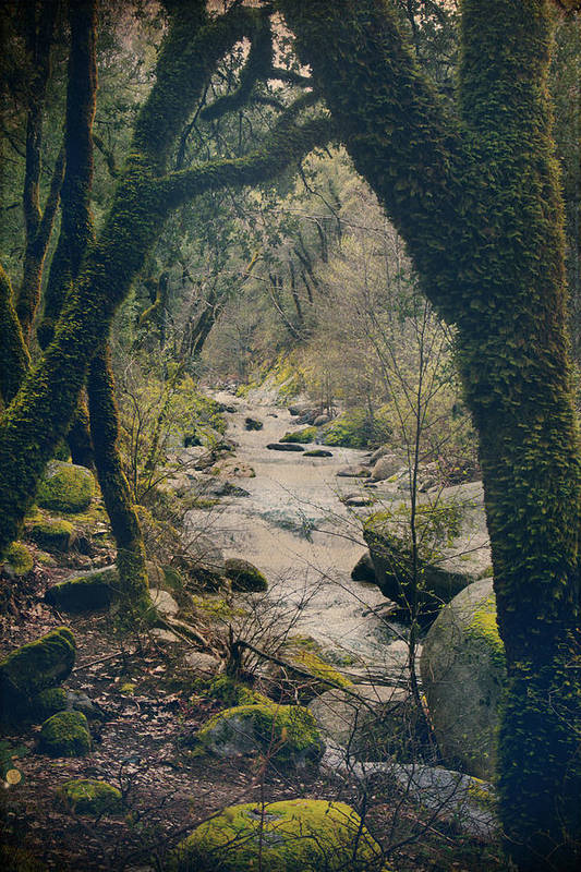 Whiskeytown National Park Art Print featuring the photograph What We Could've Had by Laurie Search