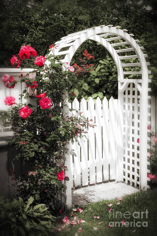 Trellis Print featuring the photograph White Arbor With Red Roses by Elena Elisseeva