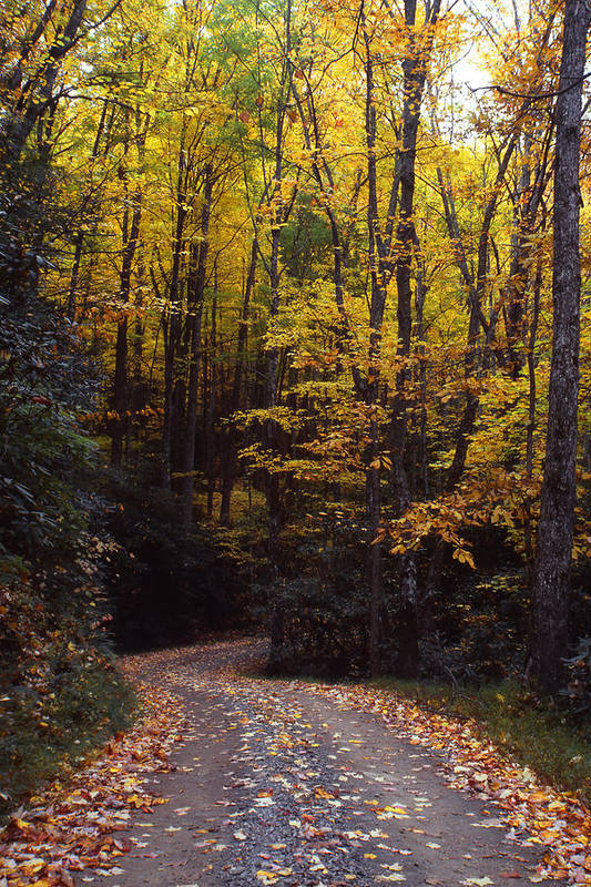 Great Smokey Mountains National Park Art Print featuring the photograph Winding Road - Fall Color by Harold Rau