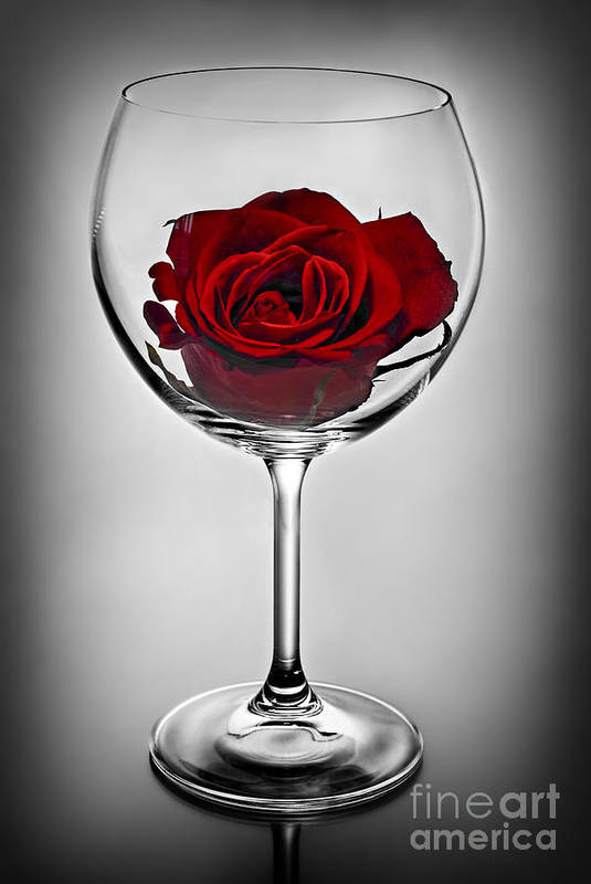 Glass Art Print featuring the photograph Wine Glass With Rose by Elena Elisseeva