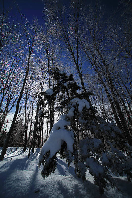 Winter Art Print featuring the photograph Winter Blue by Karol Livote
