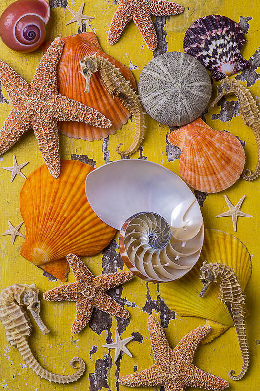 Wonderful Sea Life Art Print featuring the photograph Wonderful Sea Life by Garry Gay