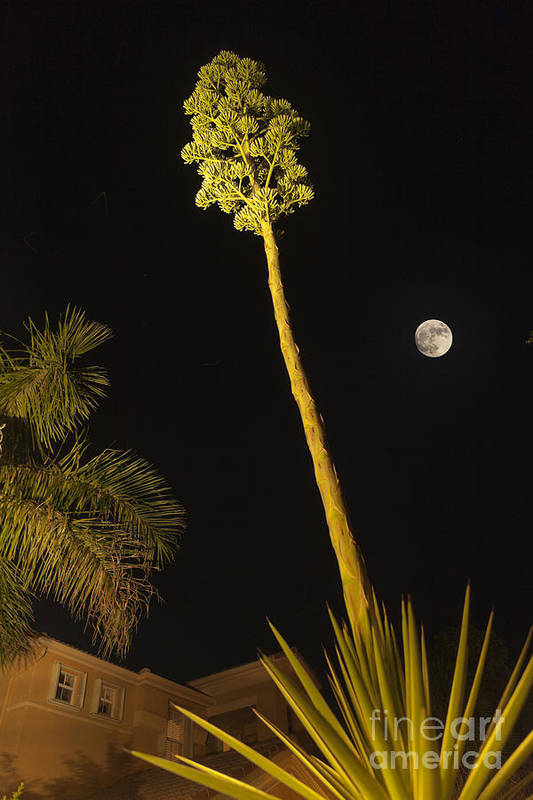Agave Art Print featuring the photograph Full Moon by Juan Silva