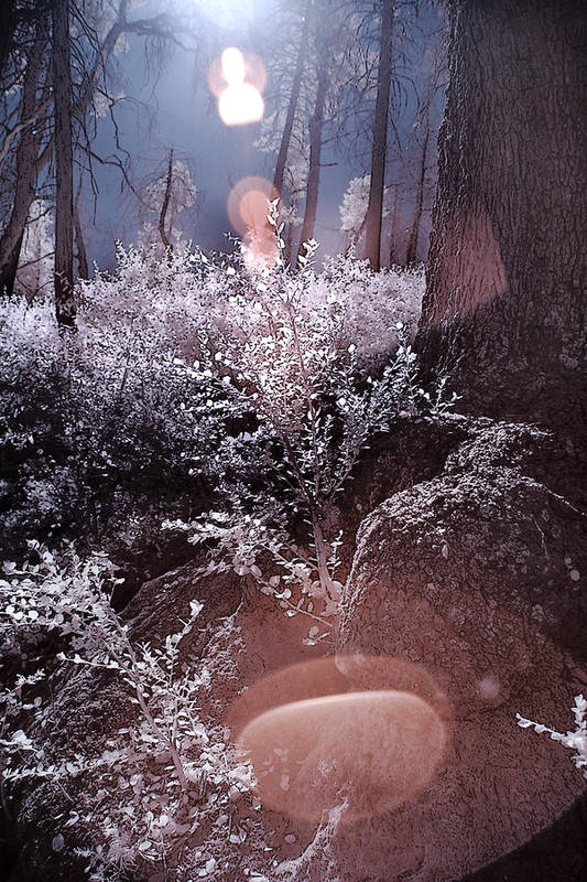 Infrared Art Print featuring the photograph Infrared Flare by Eileen Mandell