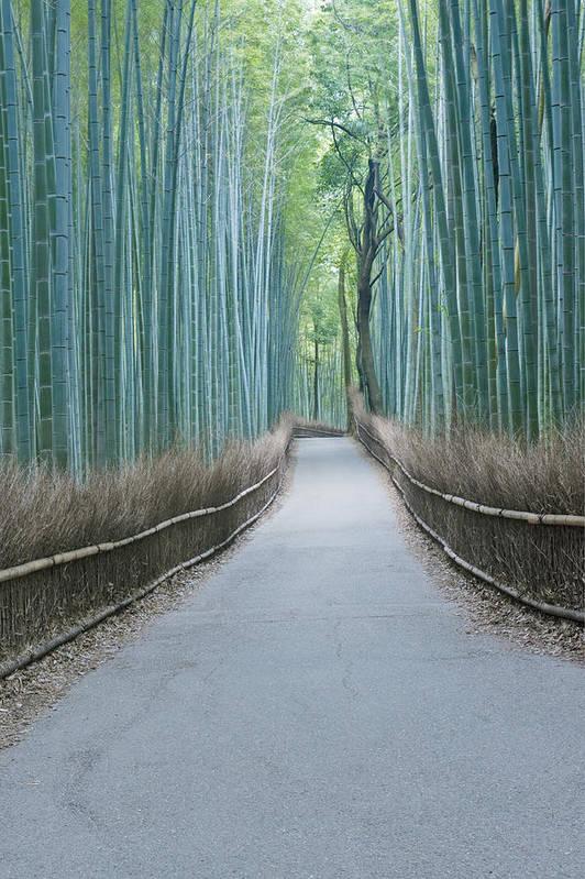 Photography Print featuring the photograph Japan Kyoto Arashiyama Sagano Bamboo by Rob Tilley