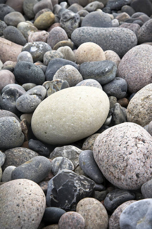 Pebbles Art Print featuring the photograph Pebbles by Frank Tschakert