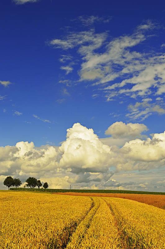 Vertical Art Print featuring the photograph Rural Summer Scene by Jochen Schlenker