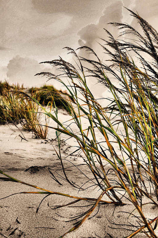 Sea Oats Art Print featuring the photograph Sea Oats by Kristin Elmquist