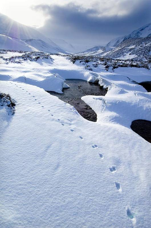 Countryside Art Print featuring the photograph Snowy Landscape, Scotland by Duncan Shaw