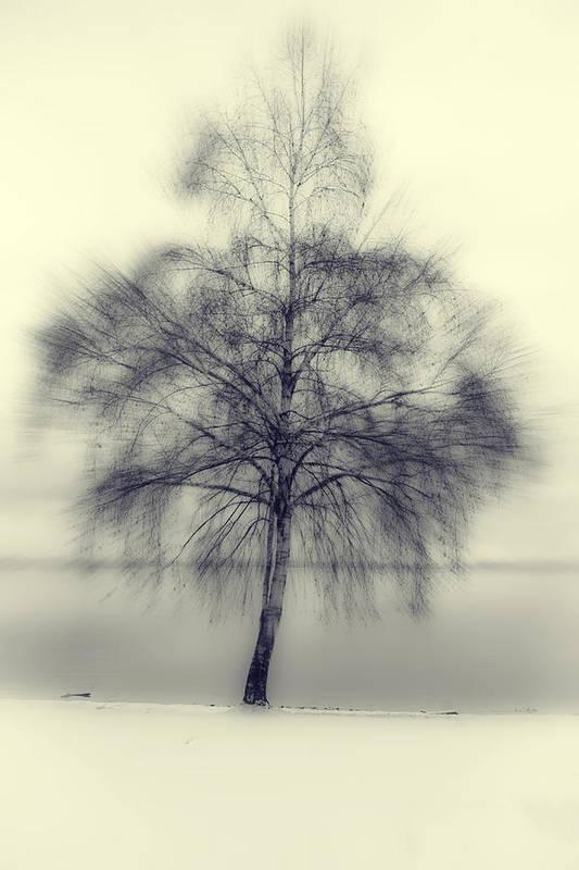 Tree Art Print featuring the photograph Winter Tree by Joana Kruse