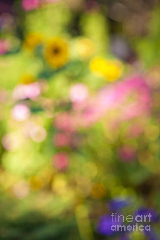 Flower Art Print featuring the photograph Flower Garden In Sunshine by Elena Elisseeva