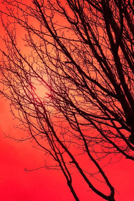 Red Art Print featuring the photograph A Black Winter Tree On Red by Jennifer Holcombe