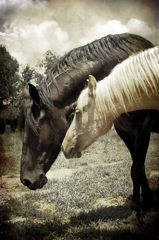 Farm Art Print featuring the photograph A Mother's Love by Elizabeth Wilson