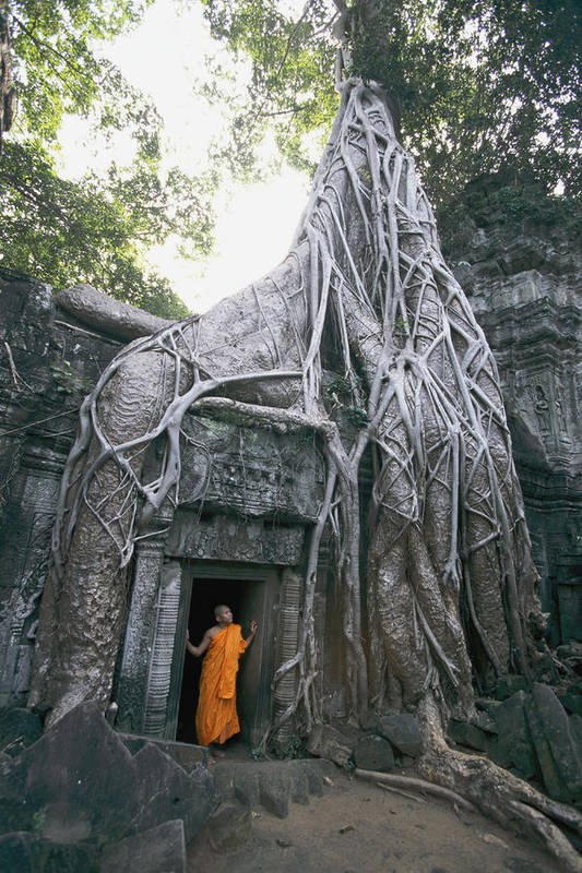 clergy Print featuring the photograph A Strangler Figs Gnarled Roots Creep by Paul Chesley