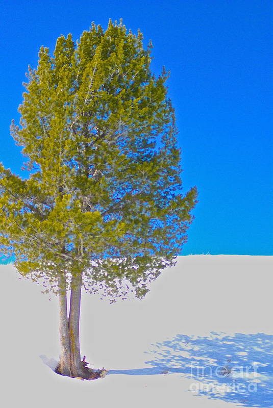 Tree Art Print featuring the photograph A Trees Shadow by Stacy La Salle