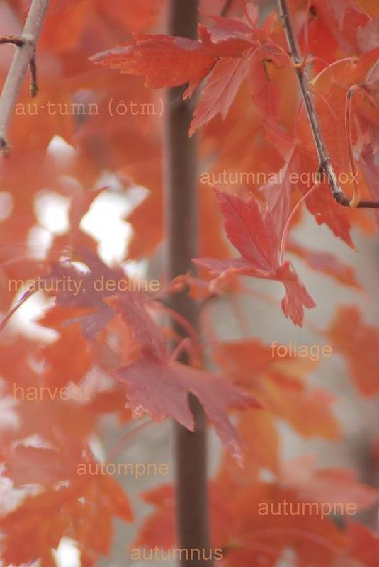 Define Art Print featuring the photograph An Orange Fall Tree With Words by Jennifer Holcombe