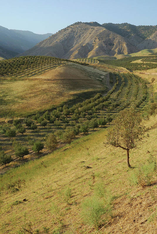 Vertical Print featuring the photograph Apple Tree Orchard Like River In Mountain by Bernard Grua