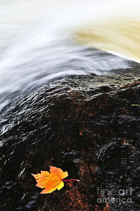 River Art Print featuring the photograph Autumn Leaf On River Rock by Elena Elisseeva