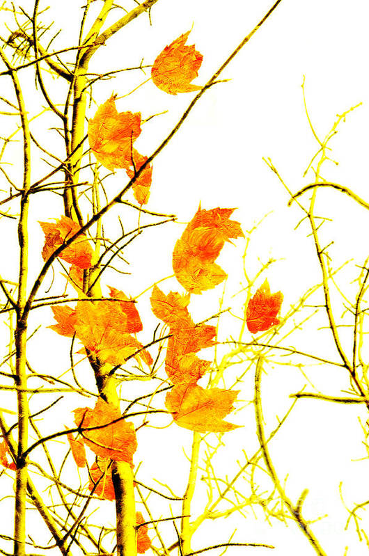 Abstract Print featuring the photograph Autumn Leaves Abstract by Andee Design