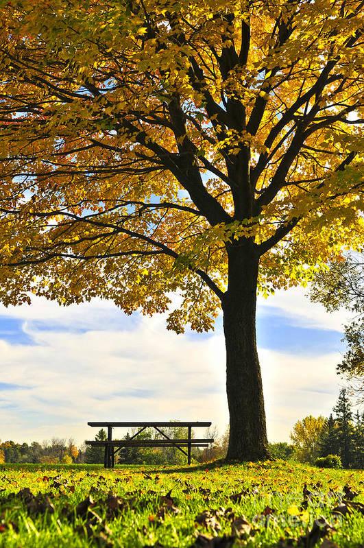 Fall Art Print featuring the photograph Autumn Park by Elena Elisseeva
