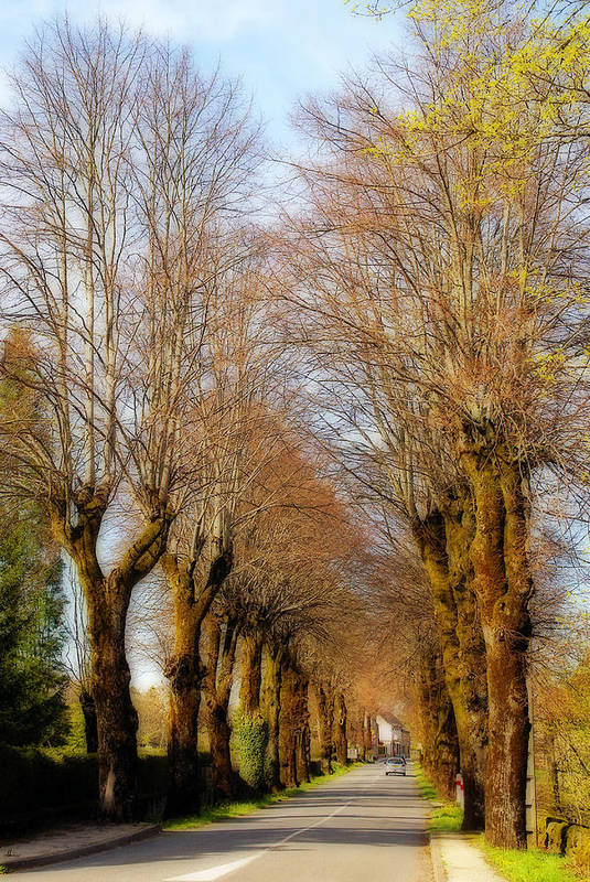 France Art Print featuring the photograph Avenue Of Trees by Rod Jones
