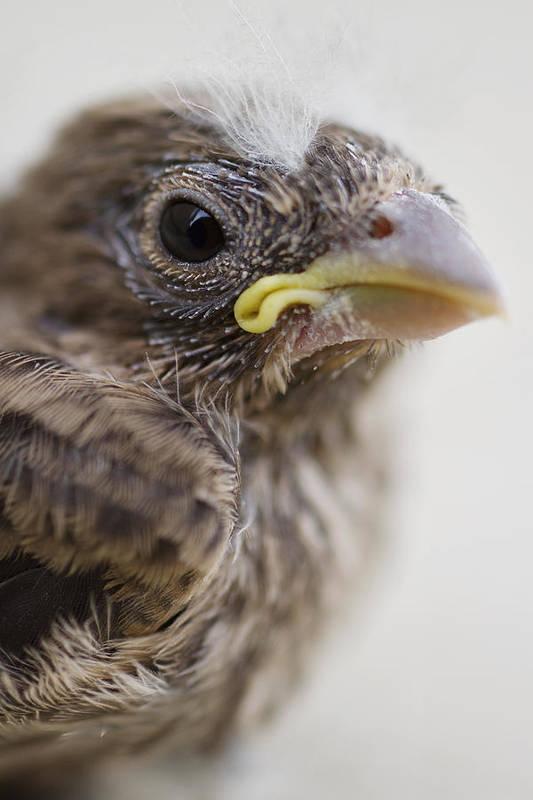 Baby Bird Art Print featuring the photograph Baby Bird 3 by Jessica Velasco