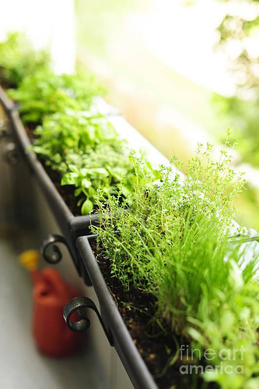 Herbs Art Print featuring the photograph Balcony Herb Garden by Elena Elisseeva