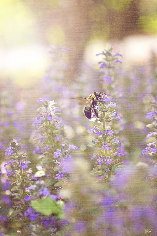 Purple Art Print featuring the photograph Bee Beeutiful by Angela Stansell