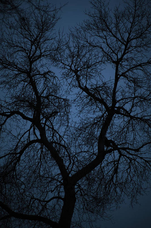 Blue Art Print featuring the photograph Black Veined Sky by Loren Rye