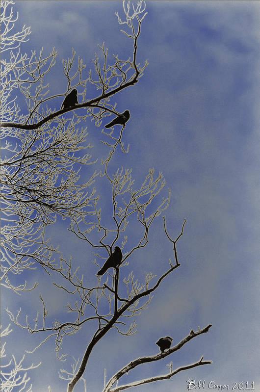Blackbird Art Print featuring the photograph Blackbirds by Bill Cannon