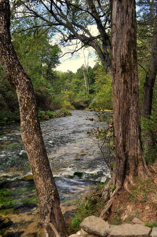 Stream Art Print featuring the photograph Blue Spring Branch by Marty Koch