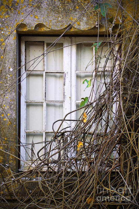 Autumn Art Print featuring the photograph Branchy Window by Carlos Caetano