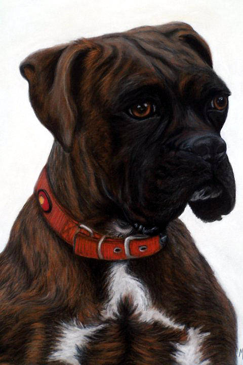 Dog Art Print featuring the pastel Brindle Boxer by Michelle Harrington