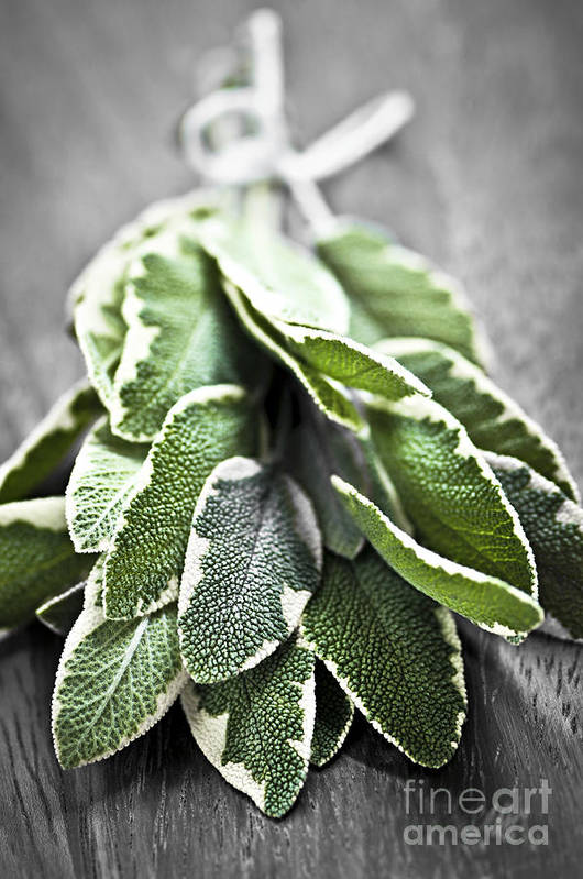 Herb Art Print featuring the photograph Bunch Of Fresh Sage by Elena Elisseeva