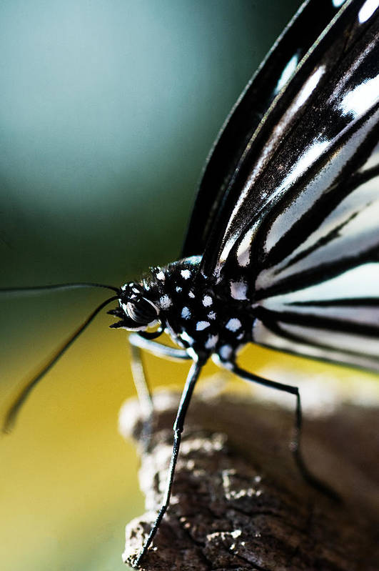 Butterfly Art Print featuring the photograph Butterfly by Rita Fuller