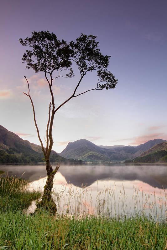 Vertical Art Print featuring the photograph Buttermere Tree by Phil Buckle