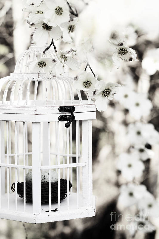 Bird Cage Art Print featuring the photograph Captured Spring In Black And White by Stephanie Frey