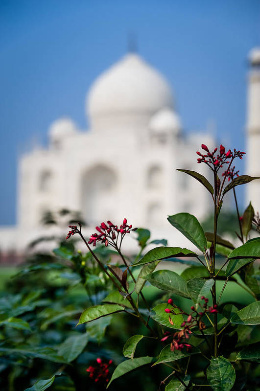 Agra Art Print featuring the photograph Colors Around The Taj Mahal by Anthony Torres