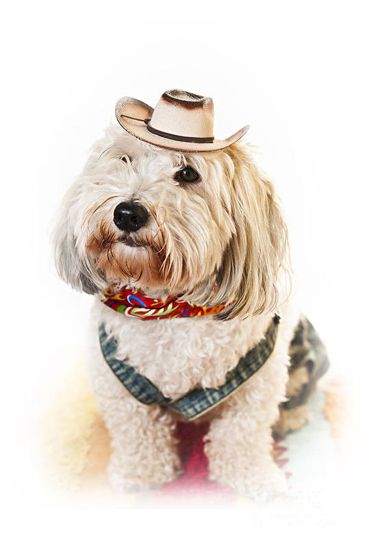 Dog Art Print featuring the photograph Cute Dog In Halloween Cowboy Costume by Elena Elisseeva