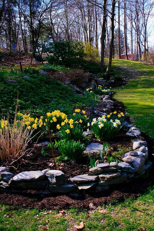 Landscape Art Print featuring the photograph Dafodils by Michael Ray