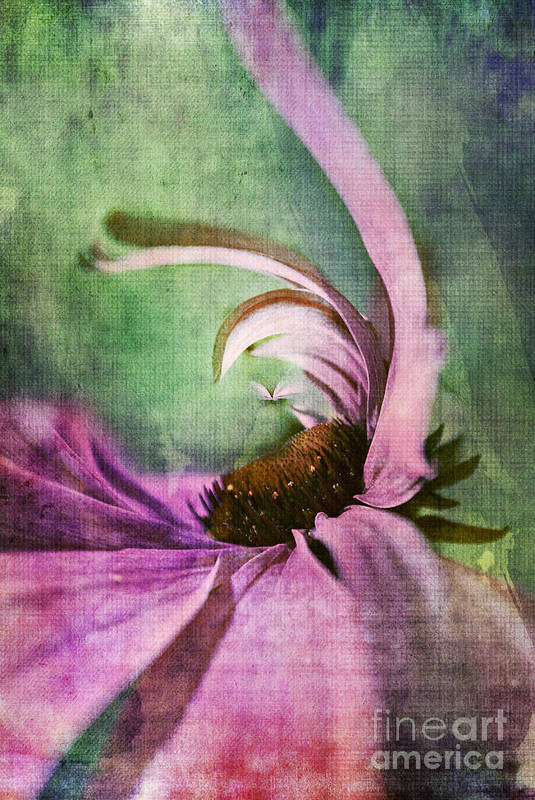 Daisy Art Print featuring the digital art Daisy Fun - A01v042t05 by Variance Collections