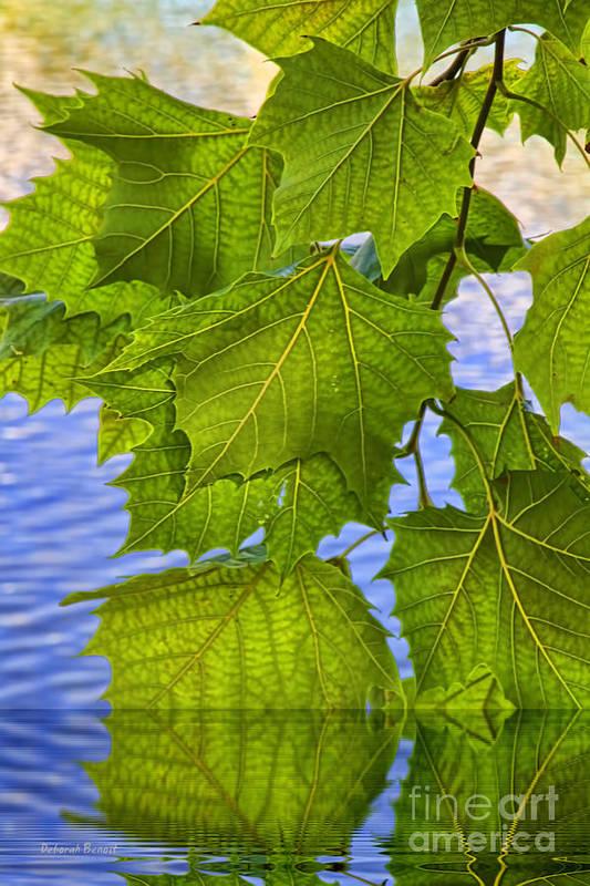 Leaves Art Print featuring the photograph Dangling Leaves by Deborah Benoit