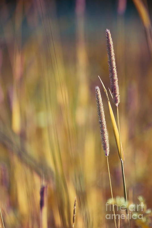 nature Photographs Print featuring the photograph Day Whisperings by Aimelle