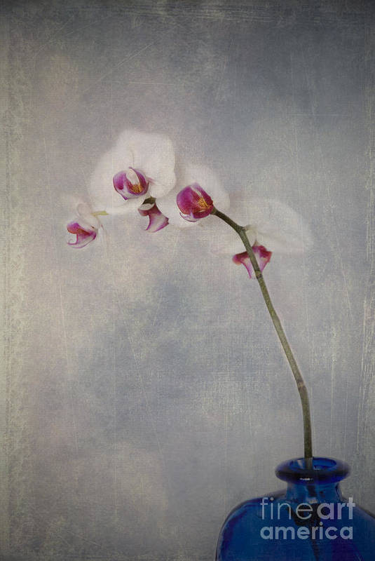 Orchid Art Print featuring the photograph Delightful I by Alana Ranney