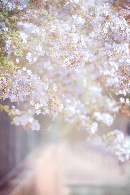 Jenny Rainbow Fine Art Photography Art Print featuring the photograph Dreaming Of Spring by Jenny Rainbow