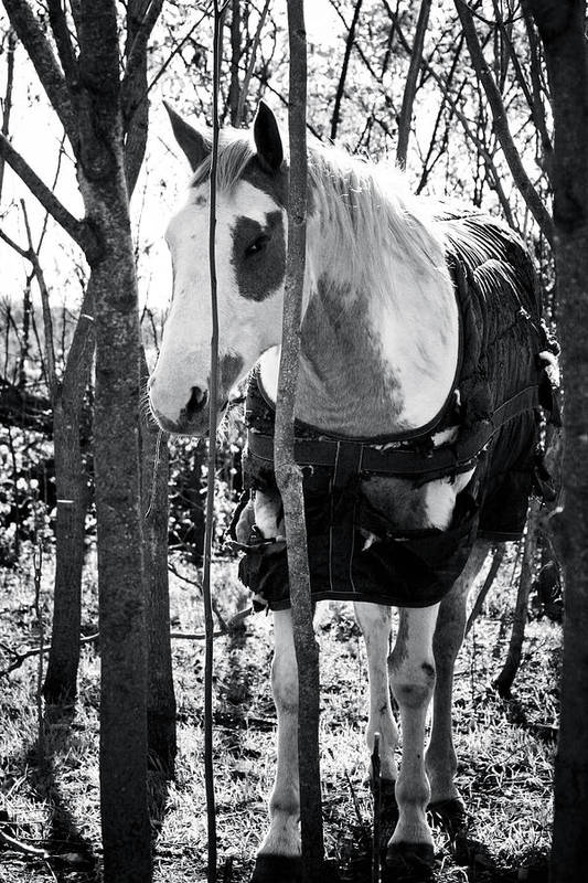 Horse Print featuring the photograph Elusive by Toni Hopper