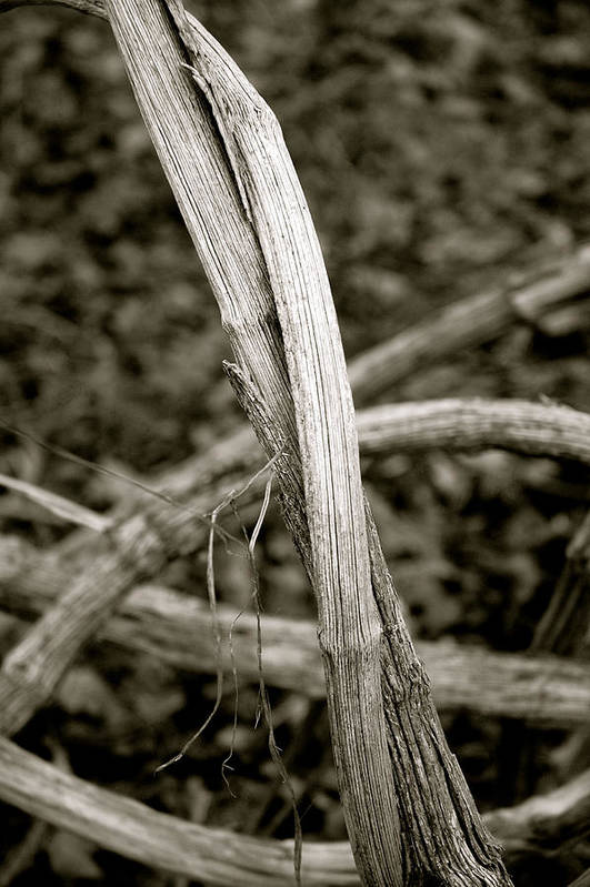 Dickon Art Print featuring the photograph Entwined - Mono by Dickon Thompson