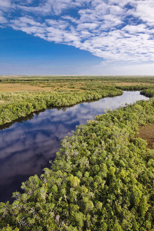 Everglades Art Print featuring the photograph Everglades Waterway by Patrick M Lynch