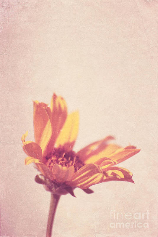 Daisy Print featuring the photograph Expression - S07ct01 by Variance Collections