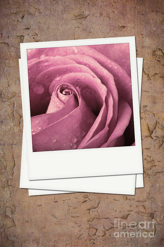 Aged Art Print featuring the photograph Faded Rose Photo by Jane Rix